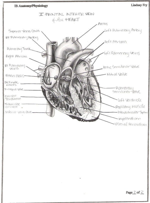Frontal Interior View of Heart by lindsayfry on deviantART