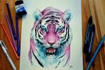 Bubblegum Tiger