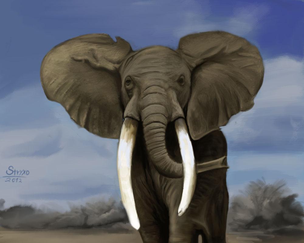 Elefante by Stryxo002 on DeviantArt