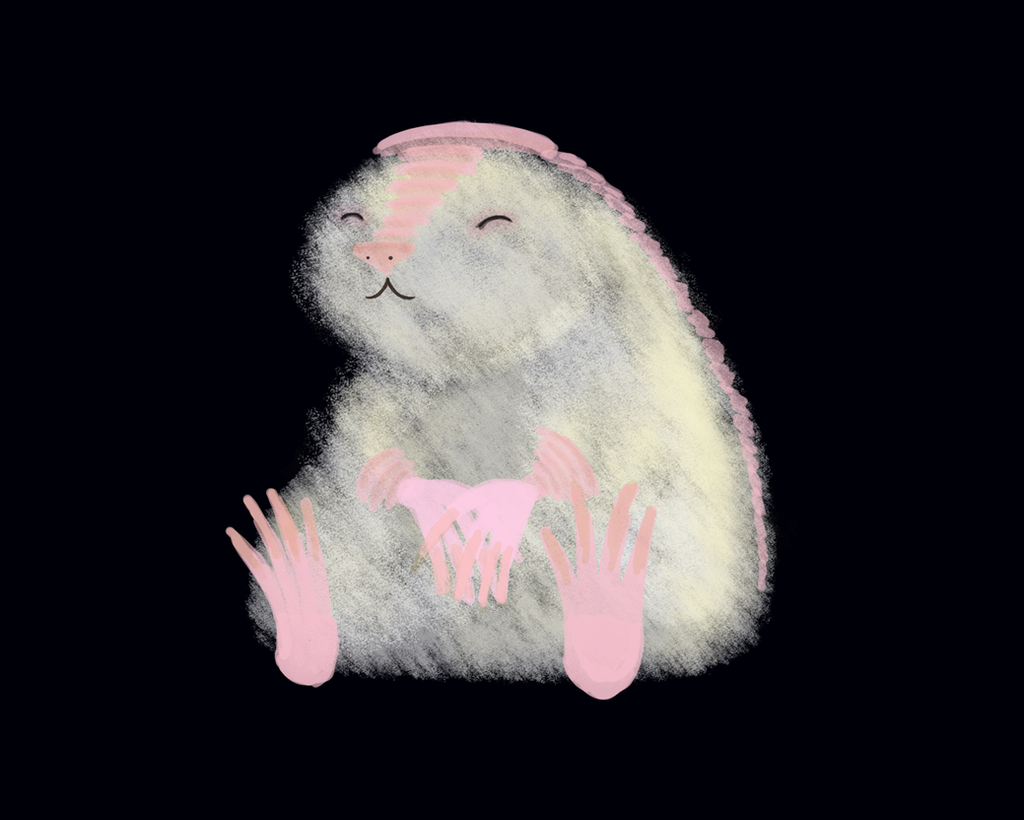 Pink fairy armadillo pet - photo#8