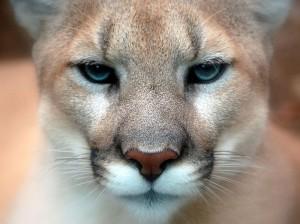Gypsy-puma's Profile Picture