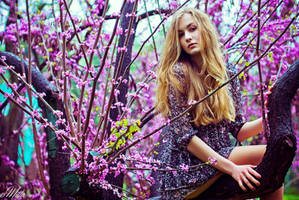 Cercis by cocainacola