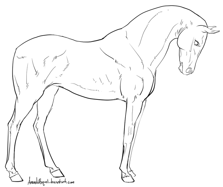Standing horse lineart by amandaraquel on deviantart for Thoroughbred coloring pages