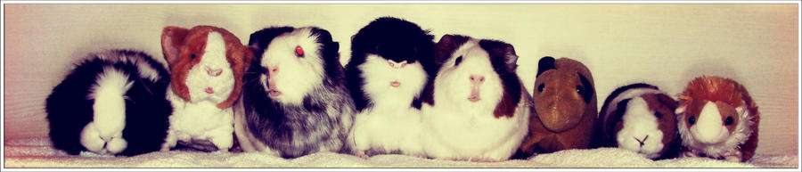 Guinea Pig Line Up by Ilona-the-Sinister