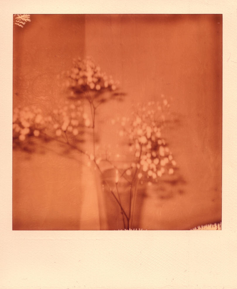 blossom trees for borrowers by yeahitsmeagain