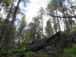 Marshall Gulch Trail 2