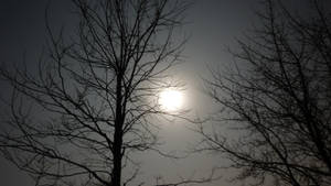 Moonshinenight by fjwenjoy