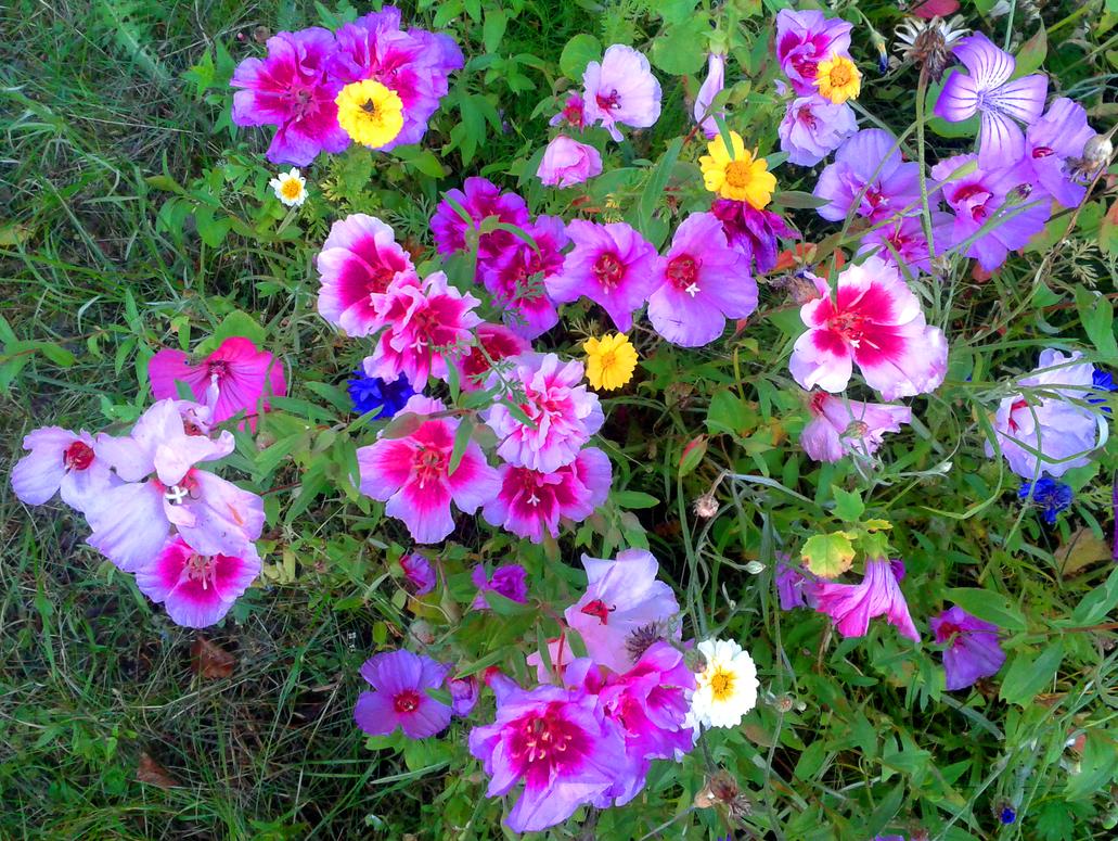 Flower Patch Stock by swandog on DeviantArt