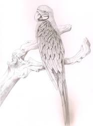 parrot Ararauna by Zorza-6