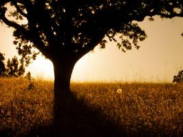 Silhouette by zahraandthepea