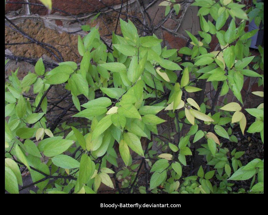 Greenery by bloody-batterfly