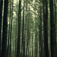 Forest Stock by Kikariz-Stock