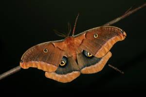 Moth Stock by Kikariz-Stock