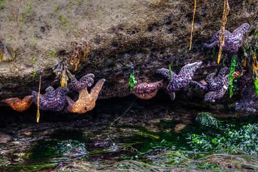 Multiple Star Fish by elpez7