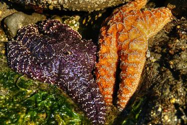 Starfish Friends by elpez7