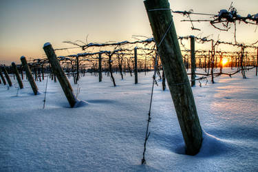 Grapes Winter 2 by elpez7