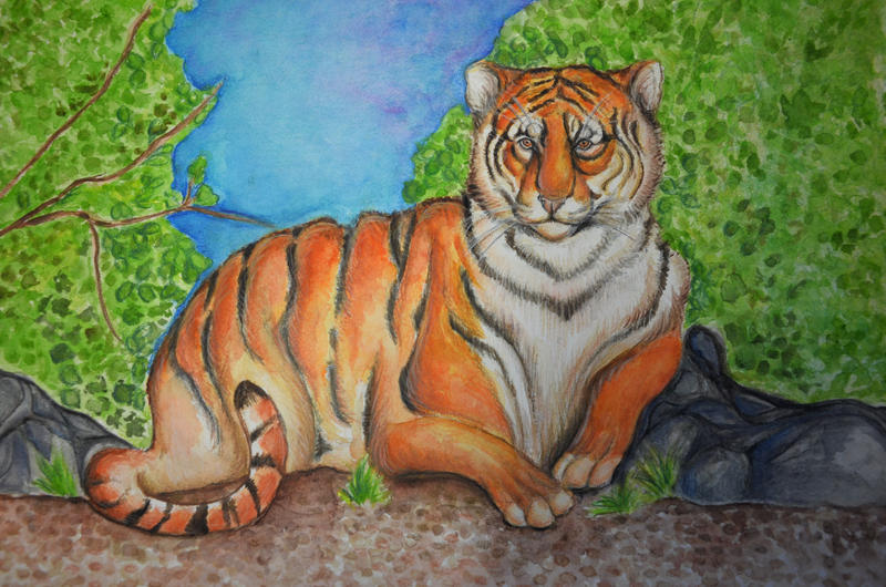 Resting Tiger by Magizoom