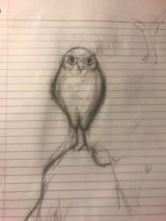 Work Doodles: Burrowing owl