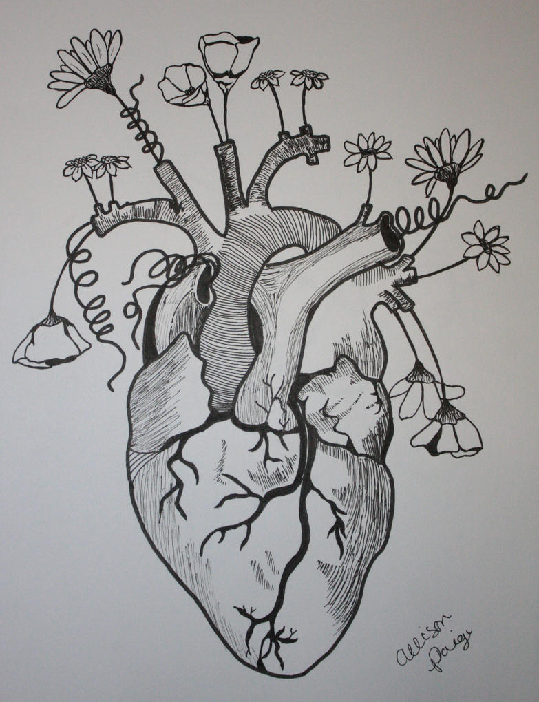 Anatomical Heart by apaige92 on DeviantArt