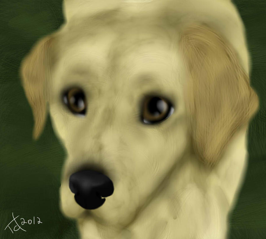Klotsj the labrador by Shadyyayay