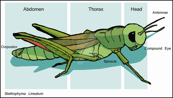 grasshopper diagram by acejp on deviantart grasshopper 721d wiring diagram grasshopper diagram