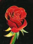 Oil Pastel Rose