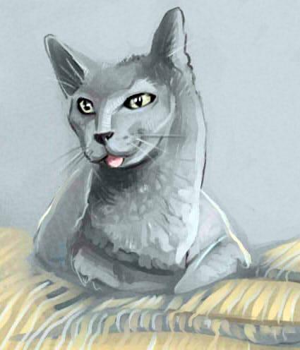 cat by Sdoba