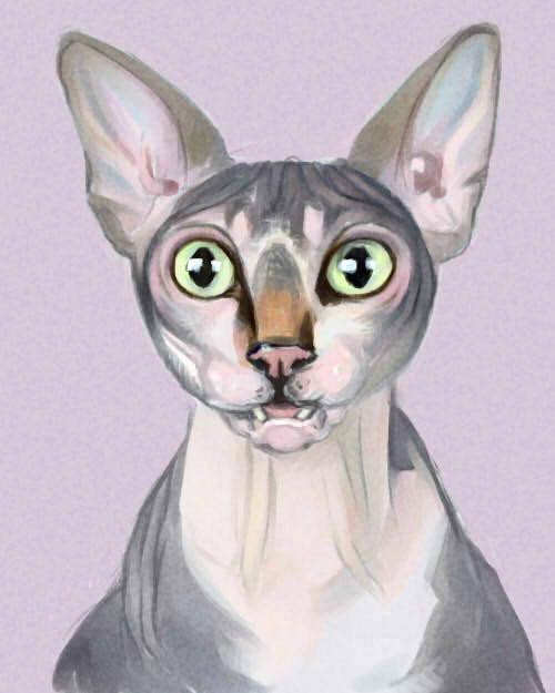 cat2 by Sdoba