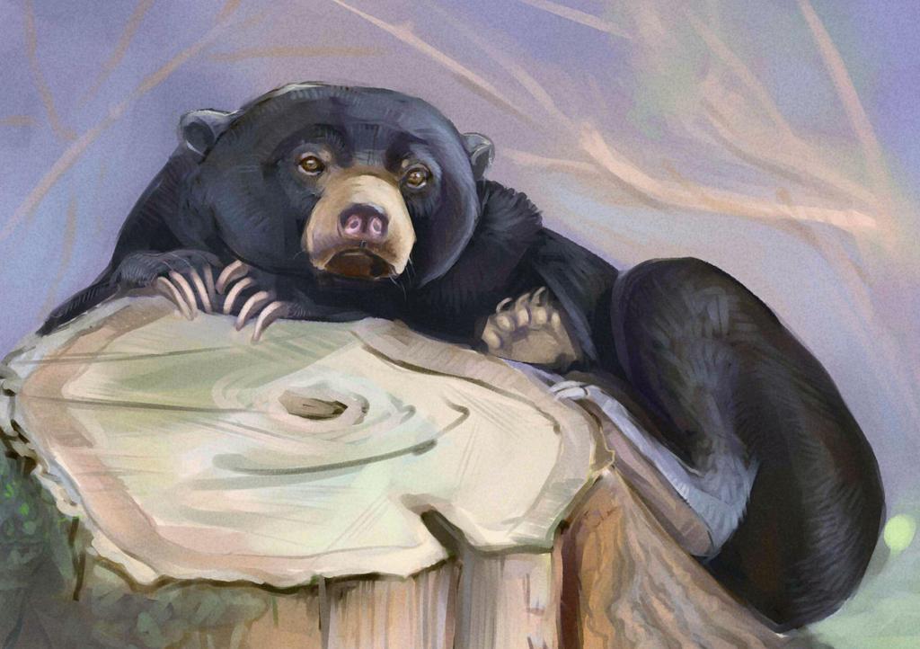 bear by Sdoba