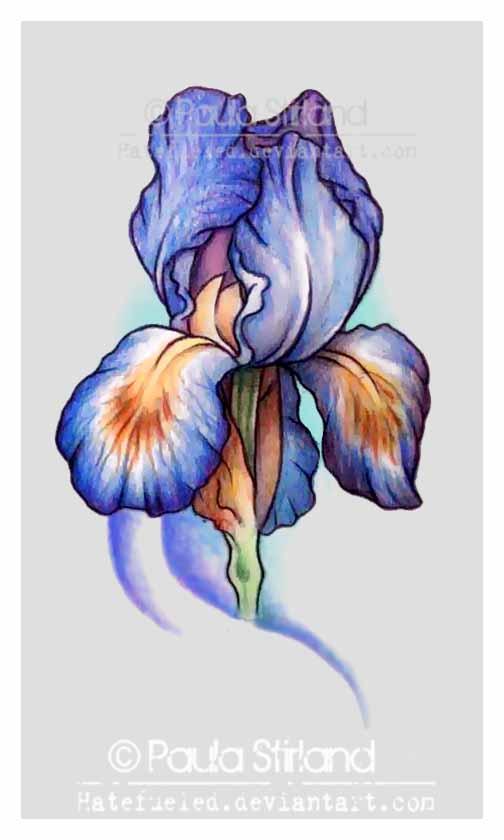 Iris by hatefueled