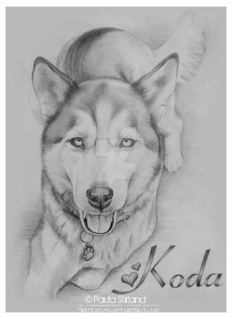 Koda by hatefueled