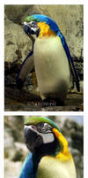 Real Mapenguins