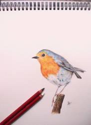 Robin by Roccia95
