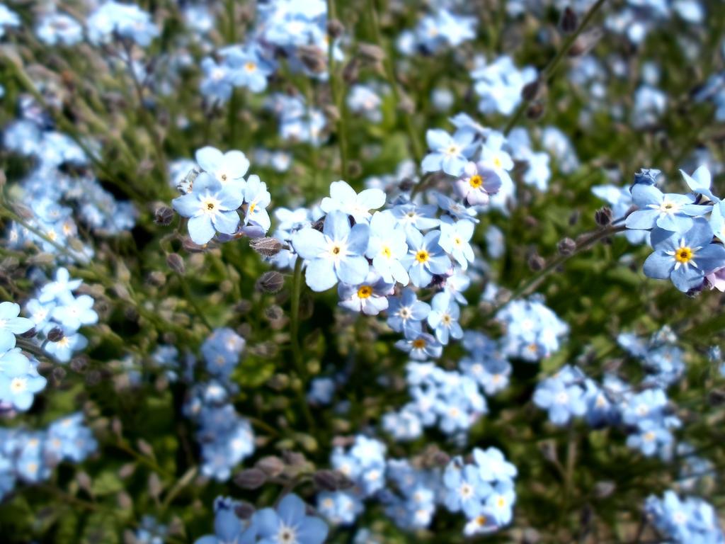 Little blue flower by AngelSmileeeee