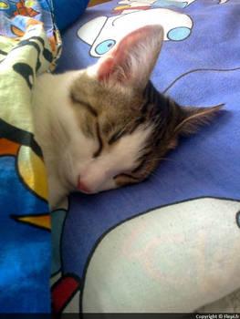 My sleeping cat