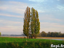 Tree House by flepi
