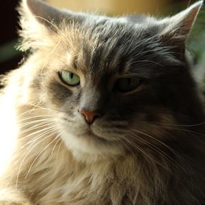 fujimotion's Profile Picture