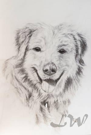Sketched Dog by CrazyAndFallenForArt