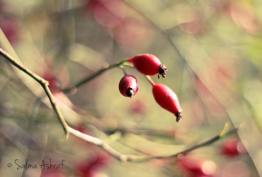Berries by SalmasPhotos