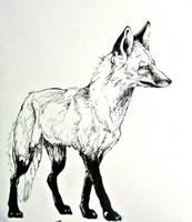 Fox ink sketch by prayforelves