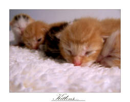...Kittens... by wR7