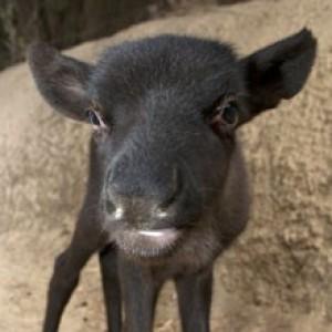 Animal0Artist's Profile Picture