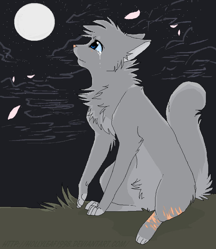 Warrior Cats Beyond The Code