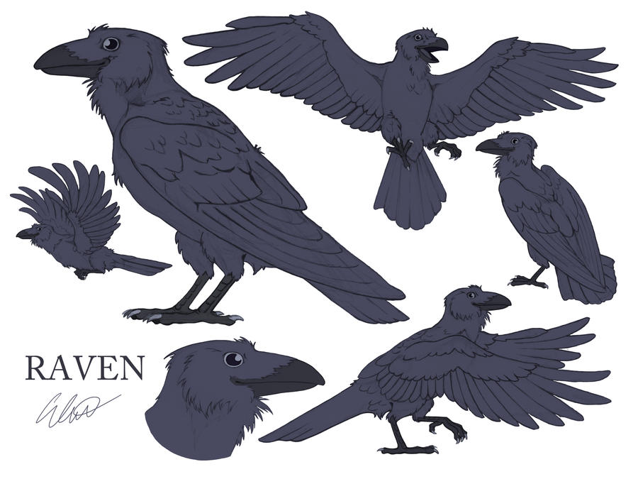 Raven Model Sheet by brightredrose