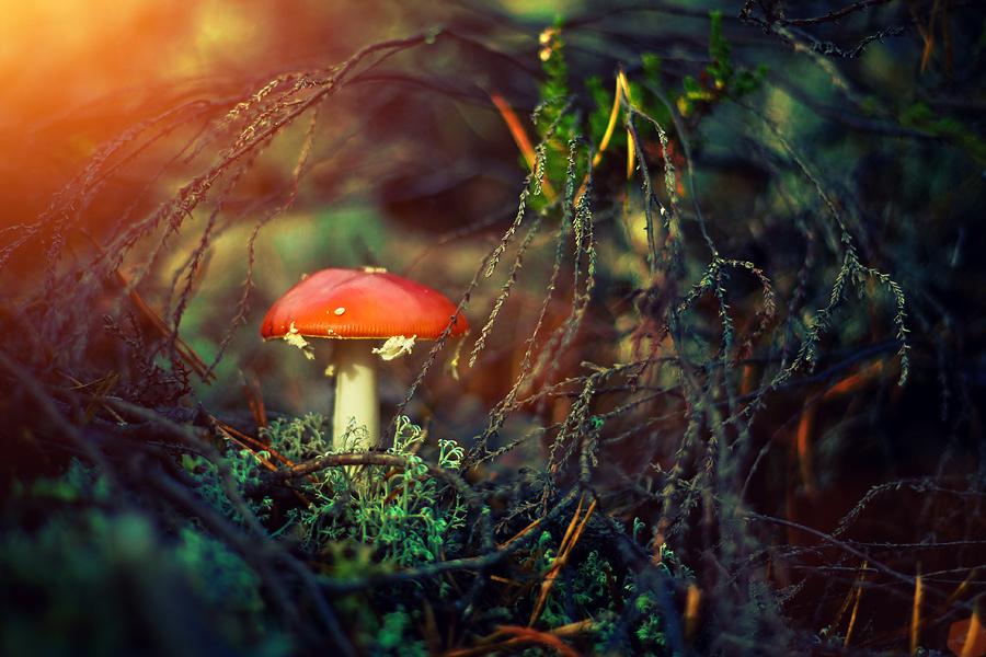 magic mushroom art - photo #30