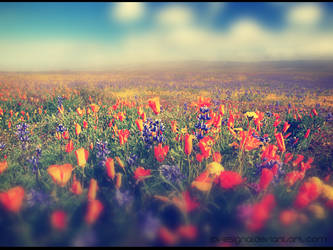 Flowers, lot of flowers by lovesignal