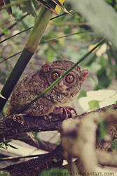 Little Monkey with Big Eyes by lovesignal