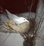 Bird's nest in my room by poore-poore-bonapart
