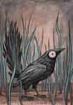 Black Bird Watercolour III
