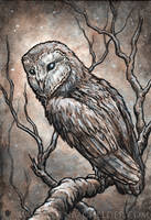 Owl watercolour by shmeeden